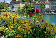 Switzerland / by Dia: Diversity in Action! ALSC