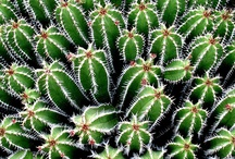Cactus / by Angeles Roy