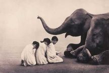 Elephants / by Red Persimmon Imports - Katrina Ulrich