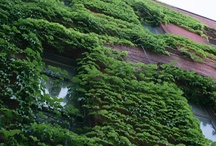 Ivy & Architecture / by Naftali Stern