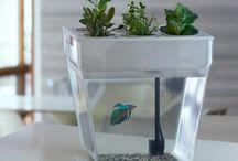Aquafarming Info / by Cathy Kantowski
