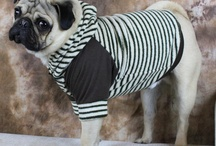 Dog Sweaters / by Mighty Dog Clothes co.