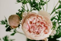 Flowers / by Jessica Keegan
