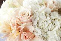Bradi & Andrew / Wedding Fleurs / by Allyson Abbott