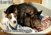 Funny!! / by Laurel LaManna -Koenigsberg