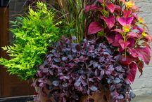 Plants/Flowers / by Leslie Varty