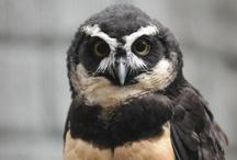 Birds! / by Tulsa Zoo
