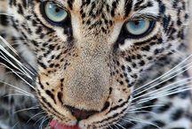 Wonderful creatures / by Jacqui Mahopo