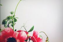 Flowers / by Augenpralinen Petra Wille