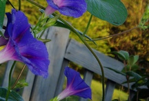 garden / by Evelyn May Koontz