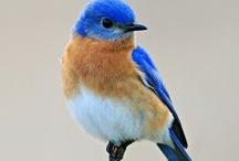Beautiful Birds / by Sue Gaunt