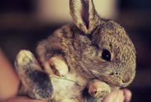 Animals / by Alex Espino