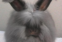 Animals-Rabbits / Photos of rabbits both domestic and wild. / by Ellary Branden