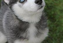 puppy / by Amanda Alligood