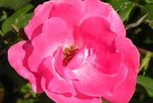 Home & Garden / by The Enterprise of Brockton