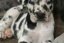 baby dogs / by kris norris