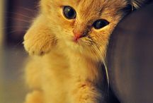 Petit Chat / by Girly Template