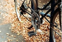 Fall cycling / by wheel & sprocket