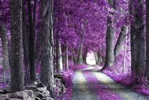 purpleness!!! / by Amanda Stalvey