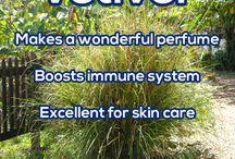 Health/Essential Oils / by sylvia