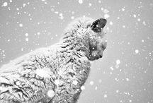 Eight & Tama(八房とたま) / おうちで飼う犬の名前は「八房」猫の名前は「たま」そう決めてます! cats & dogs / by Junko Momota