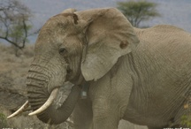 Elephants / by Furio Fu