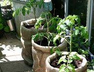 Gardening / by Jennifer Watchorn