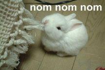 Eat It! / Nom!  Nom!  Nom! / by The Mighty HeathRa