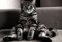 cats / by Daisy Dalberto