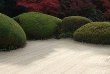 Front garden / by Fiona Guthrie
