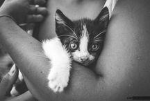 Animali / by Alfio Manasseri