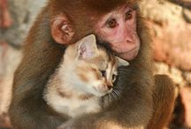 Love Doesn't Judge / Wonderful photos of unusual animal friendship and love. / by Nancy Bianchi