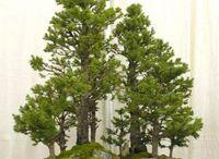 Bonsai & other potted plants / by Jerri Oyama