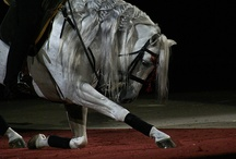 All about the Horses / by Izabella Shipp