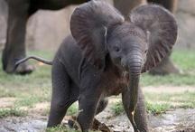 baby animals / by Sharon Lavoie