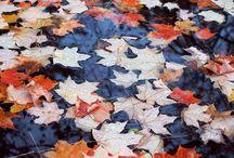 Autumn / by Alex K