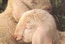 Mary had a little lamb / by Christina Blaisdell