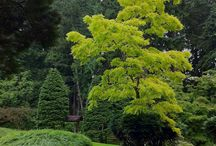 Individual trees and shrubs / by Little Mac