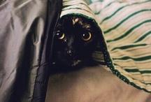 Cats / by Tamara