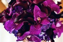 Flowers for wedding / by Keri Culp