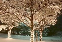 Christmas lights / by Sharon Morse