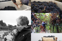 2012 Harvest / by Ceja Vineyards