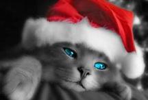 Stray Cat Strut! / cats, cats, cats fantastic felines / by Vickie Hutchins