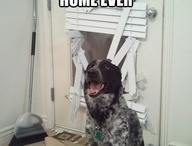 pet funnies / by Humboldt Pet Supply