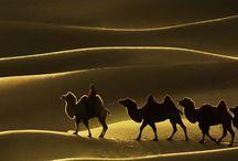 El Desierto y sus arenas / Tanta velocidad puede sentirse en la quietud, como ensordecedores sonidos en su silencio. El desierto llama con su desgarradora soledad. Lugares del mundo que sin nada a la vista, dicen tanto, de ellos, como de nosotros. Hay por allí una canción que dice que el desierto supera la distancia, pasa sobre la gente. Y algo de ello debe haber porque a su inmensidad el hombre le teme, pero a la vez lo tienta a avanzar, dar un paso al más allá.   sobre una duna que hoy es, y ya mañana no   / by Juana Martín