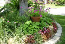 yard / Flowers for my yard / by Anna Rae Designs