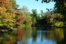 Fall Foliage in Central Park / by Central Park Conservancy