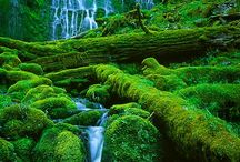 Nature and its beauty / Biggest nature lover, I'm deeply in love with nature / by Elizabeth Devereaux