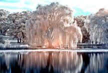 Weeping Willow Trees / by Kim Ballard