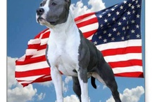 American pitbull / Dont bully my breed / by Sarah Lane